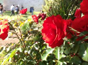 The Gardens of the Getty Center